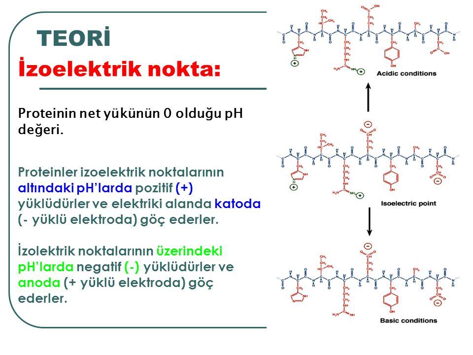 Proteinler izoelektrik noktalarının altındaki pH'larda pozitif (+) yüklüdürler ve elektriki alanda katoda (- yüklü elektroda) göç ederler.
