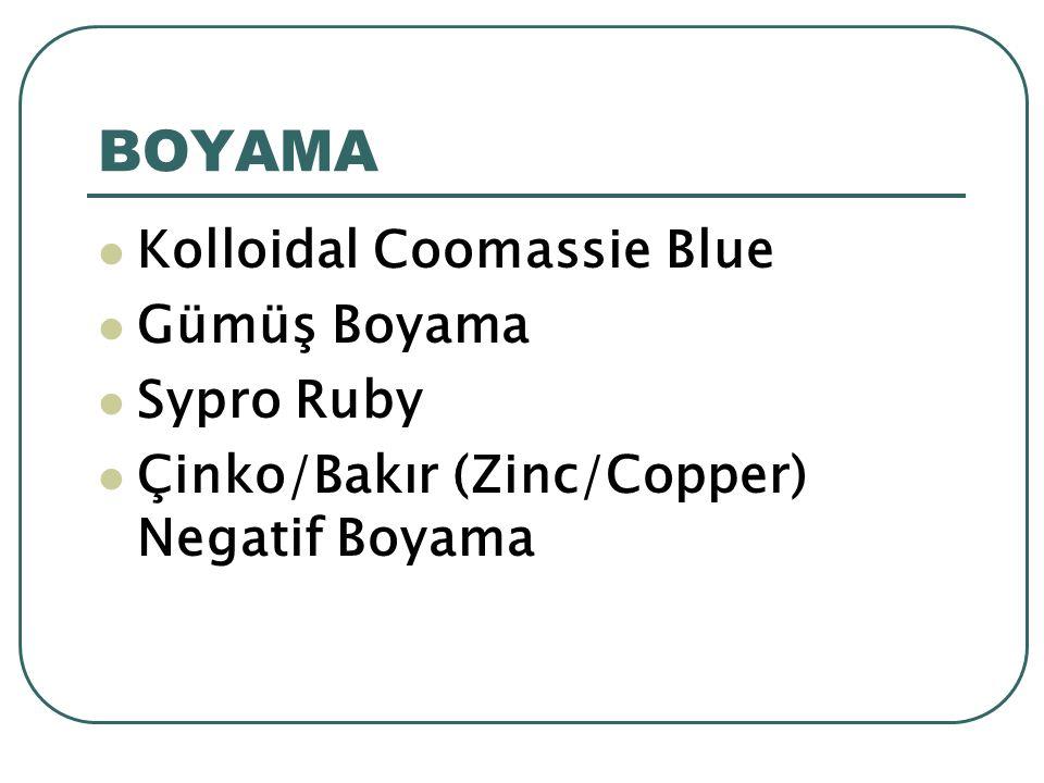 BOYAMA Kolloidal Coomassie Blue Gümüş Boyama Sypro Ruby Çinko/Bakır (Zinc/Copper) Negatif Boyama