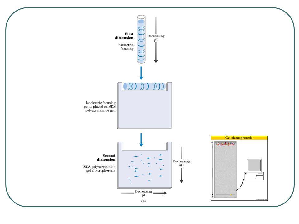Materyaller ve Aletler ReadyStrip IPG Strips