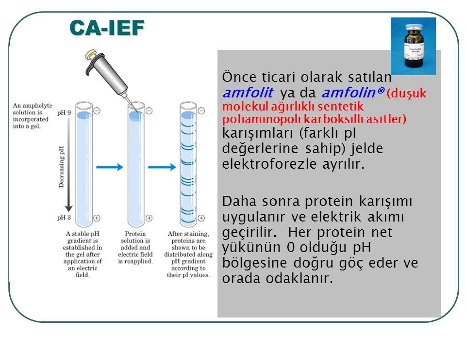 Önce ticari olarak satılan amfolit ya da amfolin® (düşük molekül ağırlıklı sentetik poliaminopoli karboksilli asitler) karışımları (farklı pI değerlerine sahip) jelde elektroforezle ayrılır.