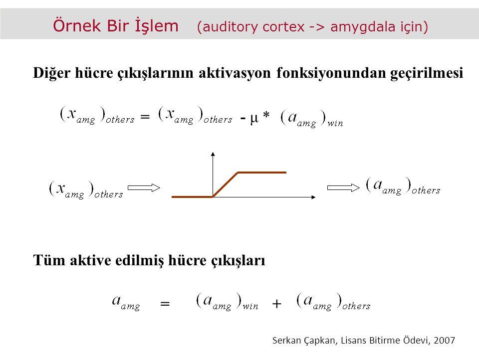 Örnek Bir İşlem (auditory cortex -> amygdala için) Diğer hücre çıkışlarının aktivasyon fonksiyonundan geçirilmesi =- μ * Tüm aktive edilmiş hücre çıkışları =+ Serkan Çapkan, Lisans Bitirme Ödevi, 2007