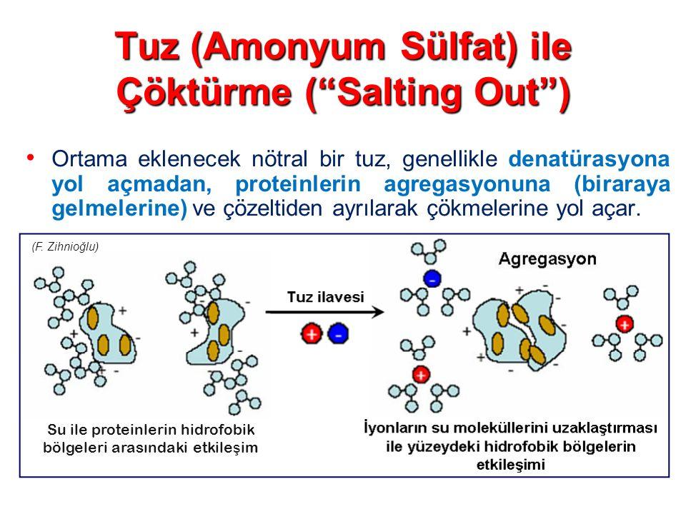 """Tuz (Amonyum Sülfat) ile Çöktürme (""""Salting Out"""") Ortama eklenecek nötral bir tuz, genellikle denatürasyona yol açmadan, proteinlerin agregasyonuna (b"""