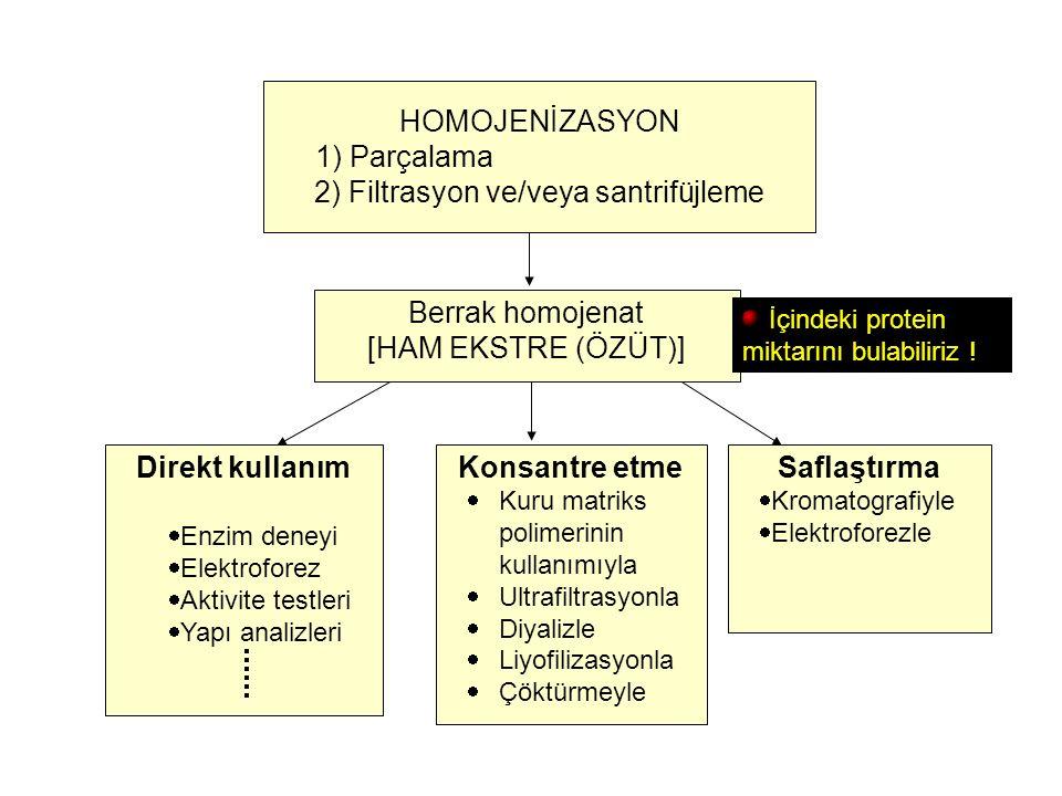 HOMOJENİZASYON 1) Parçalama 2) Filtrasyon ve/veya santrifüjleme Berrak homojenat [HAM EKSTRE (ÖZÜT)] Direkt kullanım  Enzim deneyi  Elektroforez  A