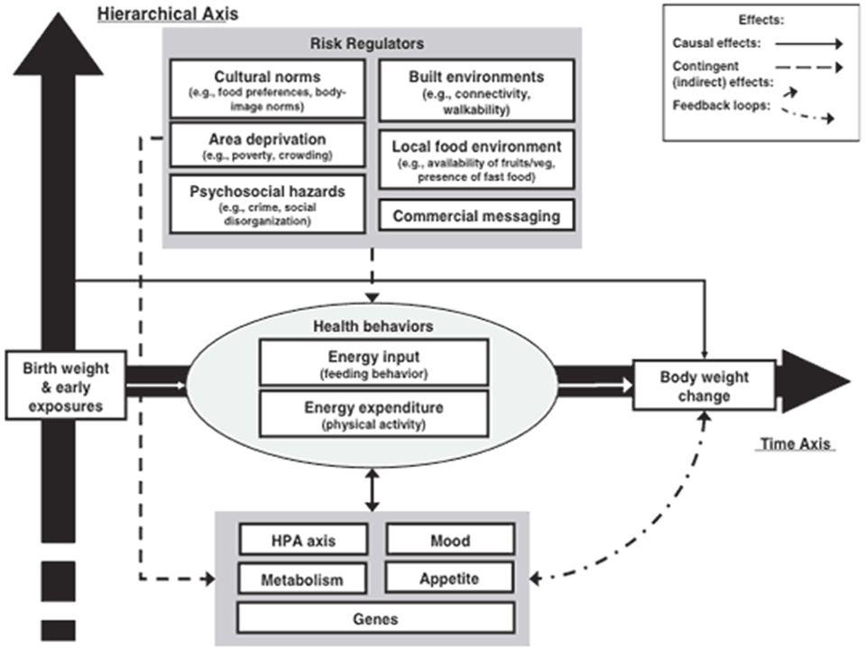 Sistemin düzenlenişi Girdi-süreç-çıktı-geribildirim akışı sayesinde açık sistemler hem dengeli duruma ulaşırlar, hem de çevresel değişmelere göre dinamik bir denge gösterirler.