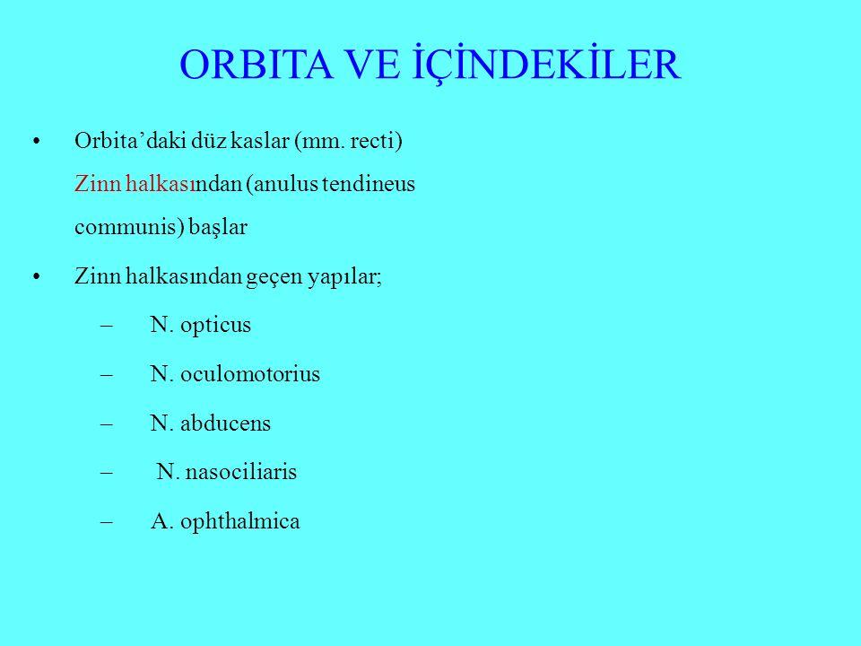 ORBITA VE İÇİNDEKİLER Orbita'daki düz kaslar (mm.