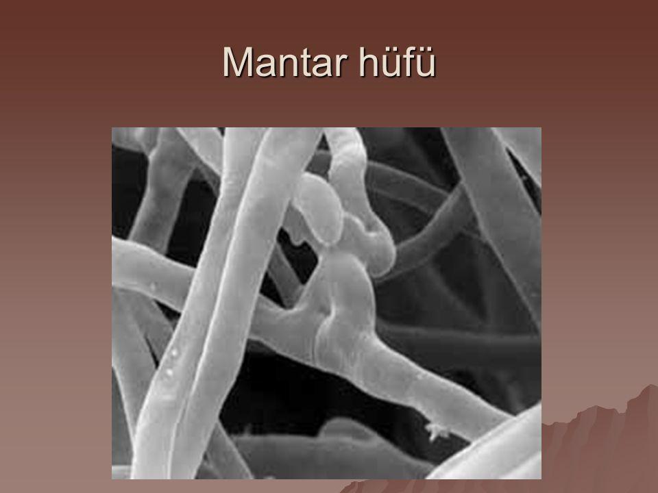 Mantar hüfü