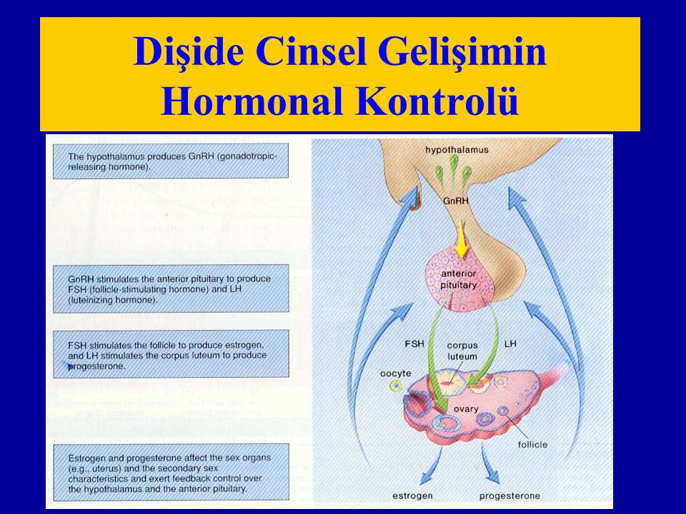Dişide Cinsel Gelişimin Hormonal Kontrolü