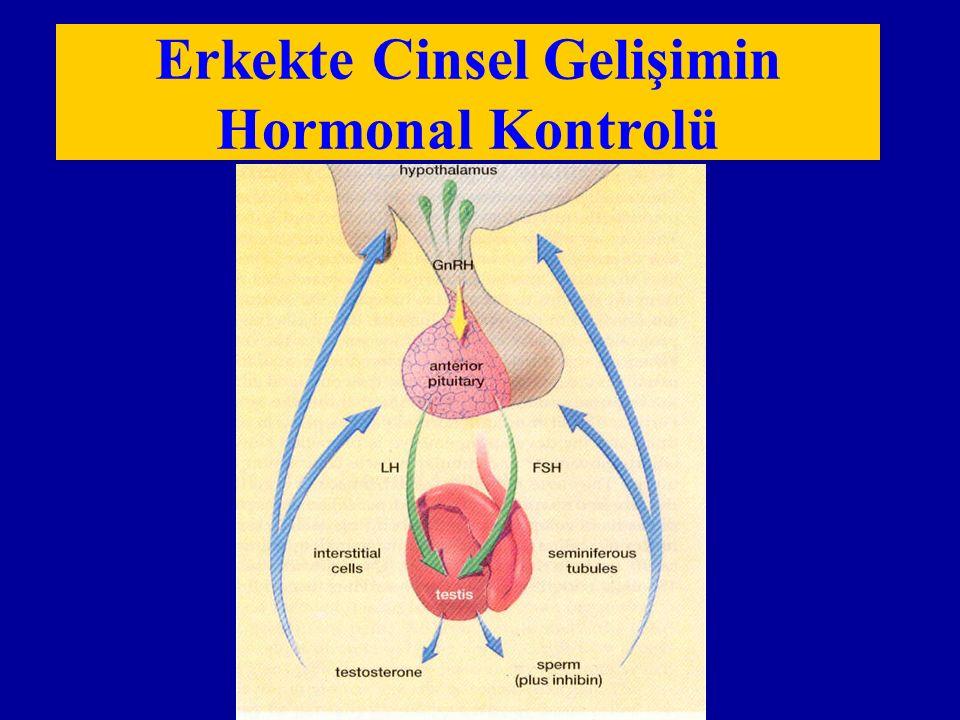 Erkekte Cinsel Gelişimin Hormonal Kontrolü