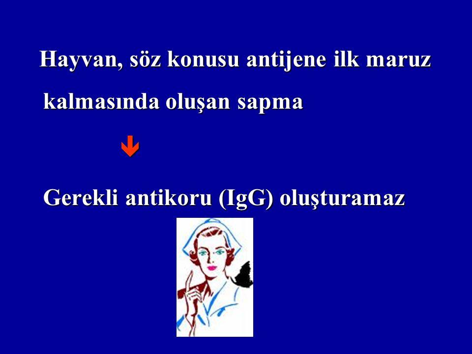 Hayvan, söz konusu antijene ilk maruz kalmasında oluşan sapma Hayvan, söz konusu antijene ilk maruz kalmasında oluşan sapma Gerekli antikoru (IgG) oluşturamaz Gerekli antikoru (IgG) oluşturamaz
