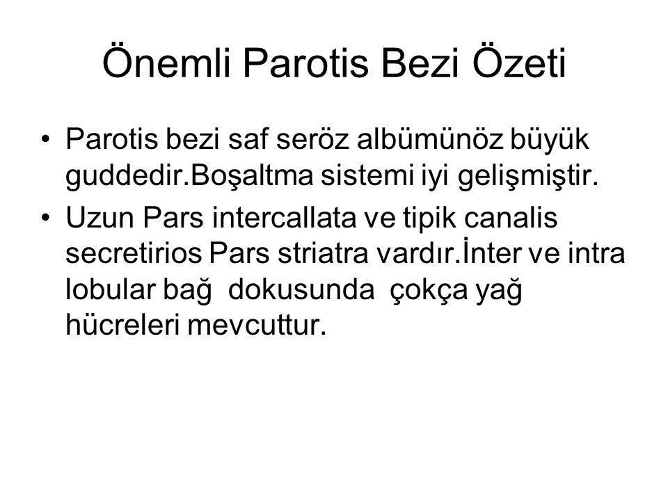 Önemli Parotis Bezi Özeti Parotis bezi saf seröz albümünöz büyük guddedir.Boşaltma sistemi iyi gelişmiştir. Uzun Pars intercallata ve tipik canalis se