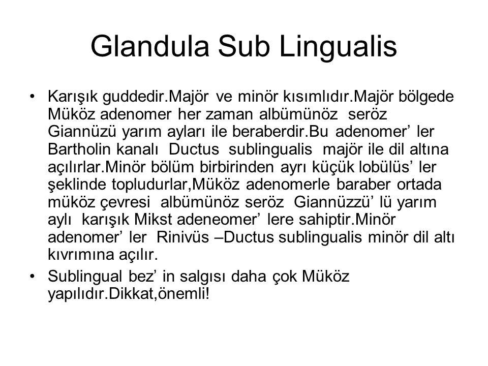 Glandula Sub Lingualis Karışık guddedir.Majör ve minör kısımlıdır.Majör bölgede Müköz adenomer her zaman albümünöz seröz Giannüzü yarım ayları ile ber