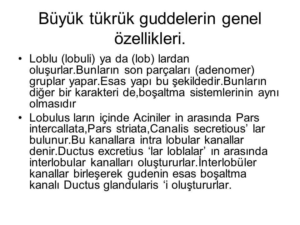 Kaynaklar SEÇKİN.İ.;ERTÜRKOĞLU.A.Ş.;TAŞYÜRE KLİ.M.;ARDA.O.;ALKAN.F.;OKTAR.H.Öze l Histoloji.İstanbul Üniversitesi,Cerrahpaşa Top Fakültesi Yayınları.İstanbul.2008.