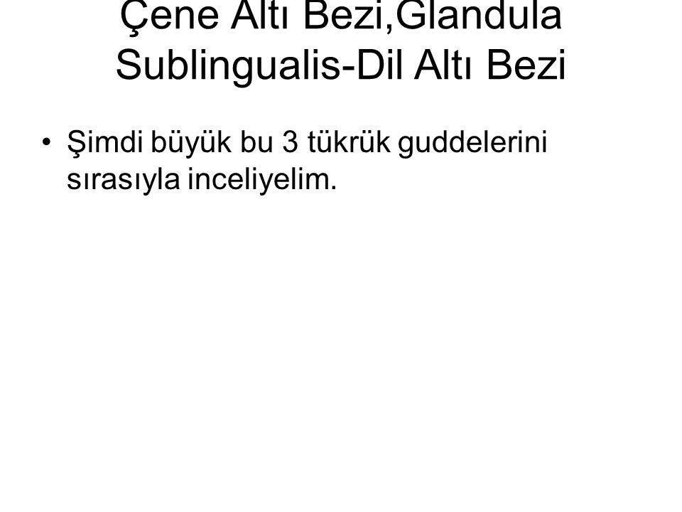 Önemli Parotis Bezi Özeti Parotis bezi saf seröz albümünöz büyük guddedir.Boşaltma sistemi iyi gelişmiştir.