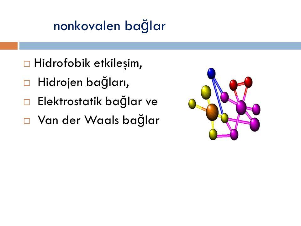 nonkovalen ba ğ lar  Hidrofobik etkileşim,  Hidrojen ba ğ ları,  Elektrostatik ba ğ lar ve  Van der Waals ba ğ lar