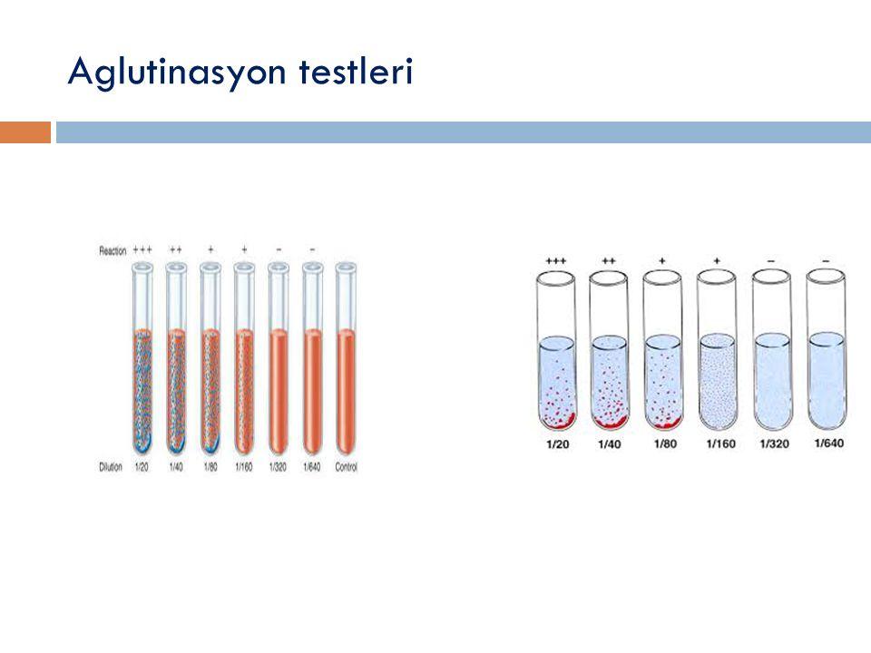 Aglutinasyon testleri
