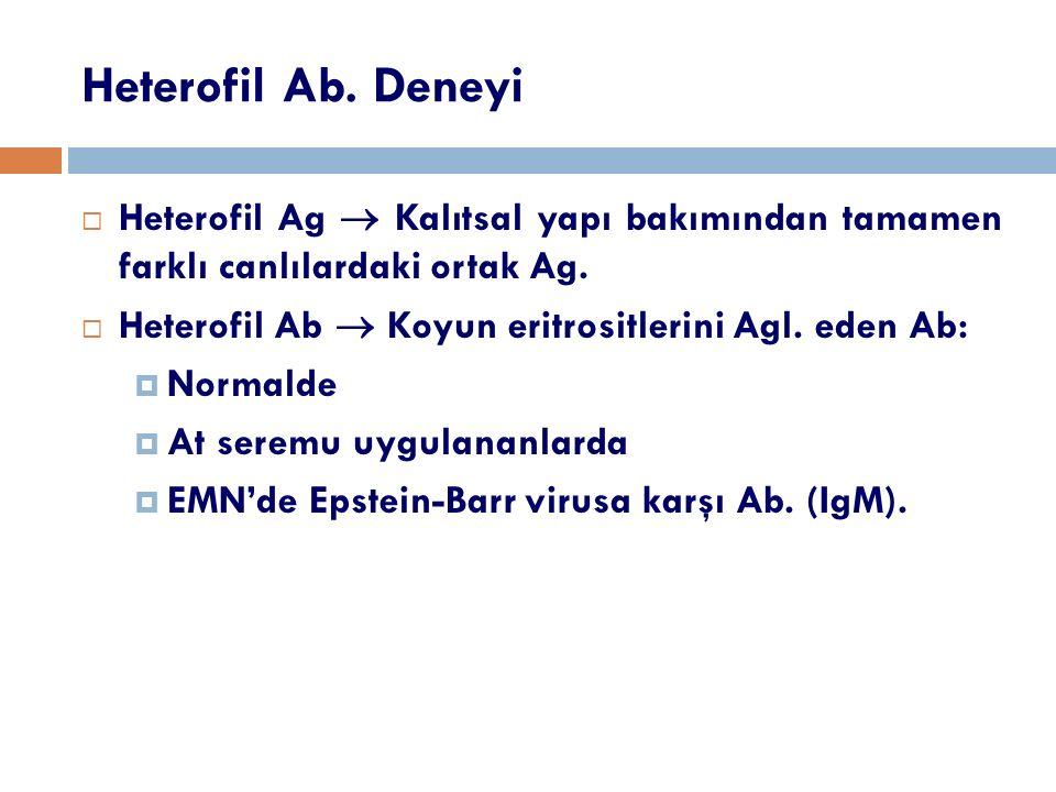 Heterofil Ab. Deneyi  Heterofil Ag  Kalıtsal yapı bakımından tamamen farklı canlılardaki ortak Ag.  Heterofil Ab  Koyun eritrositlerini Agl. eden