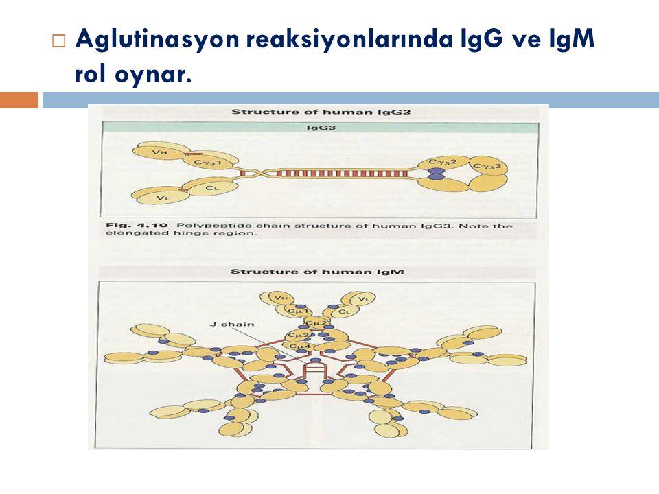 Serolojik reaksiyonların özellikleri  2.basamaktaki olayların oluşması için:  Ag, tam Ag niteli ğ inde, yani çok valanslı  Ab, tam Ab niteli ğ inde (fab+fc) olmalıdır.