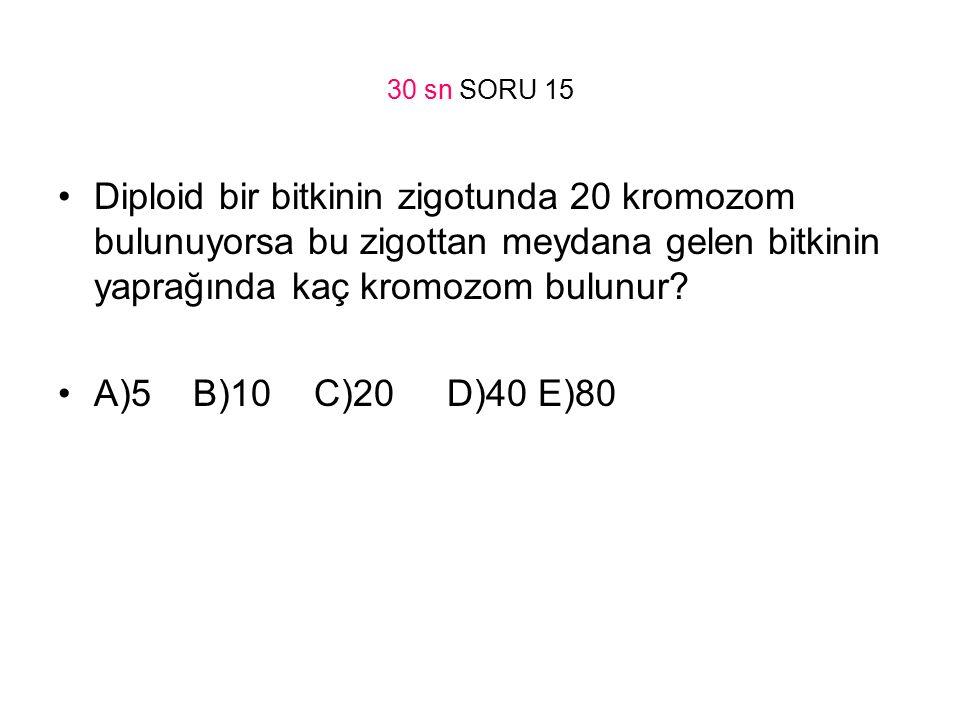30 sn SORU 15 Diploid bir bitkinin zigotunda 20 kromozom bulunuyorsa bu zigottan meydana gelen bitkinin yaprağında kaç kromozom bulunur? A)5 B)10 C)20