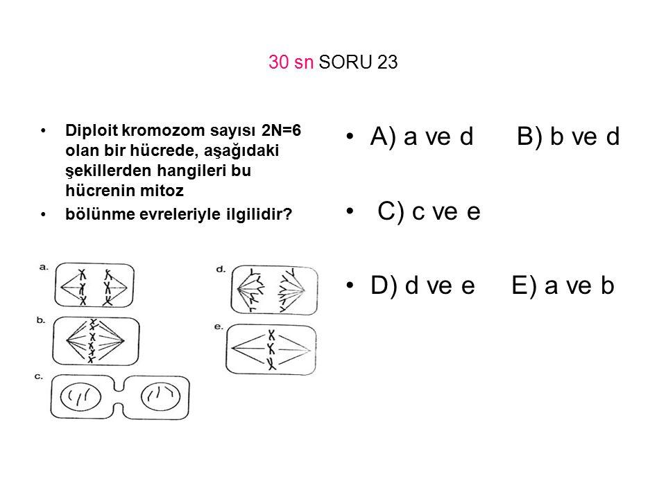 30 sn SORU 23 Diploit kromozom sayısı 2N=6 olan bir hücrede, aşağıdaki şekillerden hangileri bu hücrenin mitoz bölünme evreleriyle ilgilidir? A) a ve