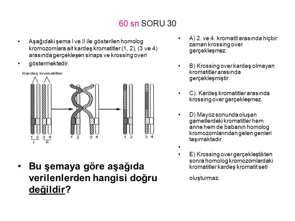 60 sn SORU 30 Aşağıdaki şema I ve II ile gösterilen homolog kromozomlara ait kardeş kromatitler (1, 2), (3 ve 4) arasında gerçekleşen sinaps ve krossi