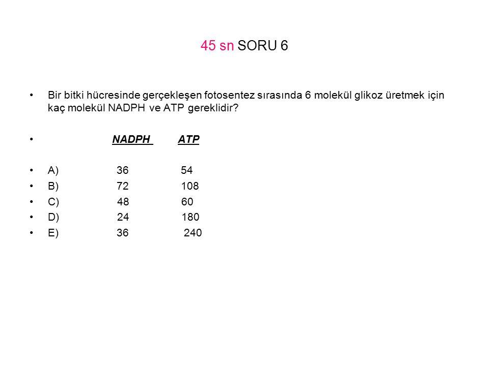 45 sn SORU 6 Bir bitki hücresinde gerçekleşen fotosentez sırasında 6 molekül glikoz üretmek için kaç molekül NADPH ve ATP gereklidir? NADPH ATP A) 36