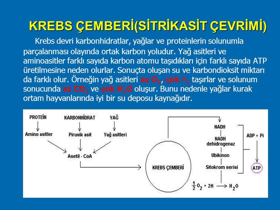 KREBS ÇEMBERİ(SİTRİKASİT ÇEVRİMİ) Krebs devri karbonhidratlar, yağlar ve proteinlerin solunumla parçalanması olayında ortak karbon yoludur. Yağ asitle