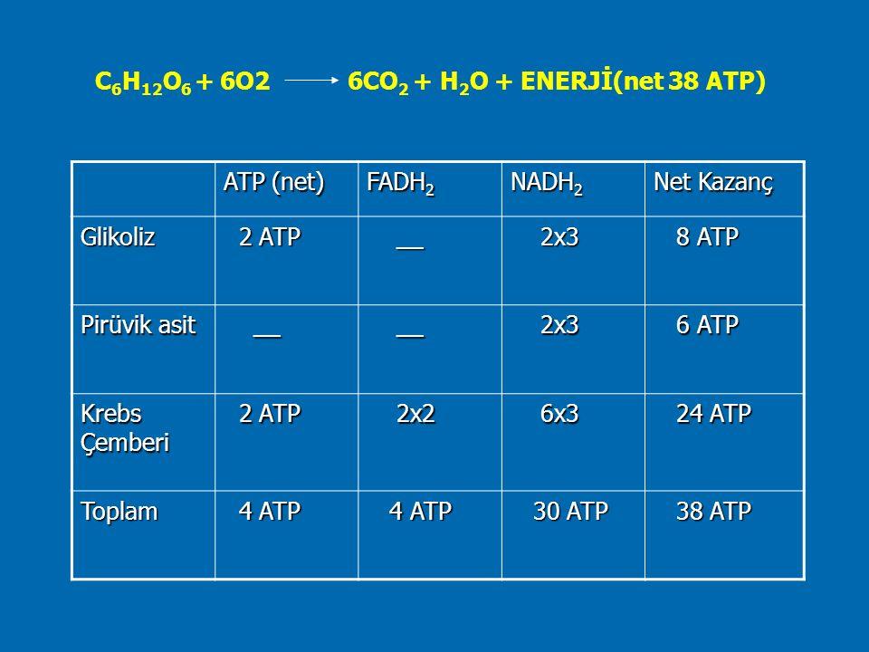 C 6 H 12 O 6 + 6O2 6CO 2 + H 2 O + ENERJİ(net 38 ATP) ATP (net) FADH 2 NADH 2 Net Kazanç Glikoliz 2 ATP 2 ATP __ __ 2x3 2x3 8 ATP 8 ATP Pirüvik asit _