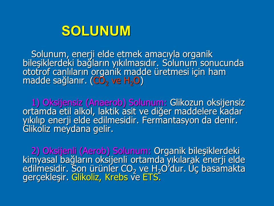 SOLUNUM Solunum, enerji elde etmek amacıyla organik bileşiklerdeki bağların yıkılmasıdır. Solunum sonucunda ototrof canlıların organik madde üretmesi