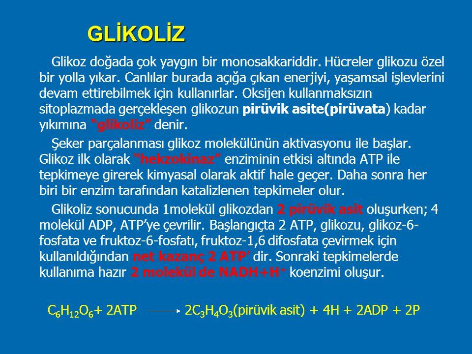 GLİKOLİZ Glikoz doğada çok yaygın bir monosakkariddir. Hücreler glikozu özel bir yolla yıkar. Canlılar burada açığa çıkan enerjiyi, yaşamsal işlevleri