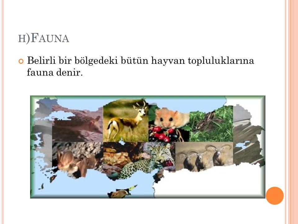 H )F AUNA Belirli bir bölgedeki bütün hayvan topluluklarına fauna denir.