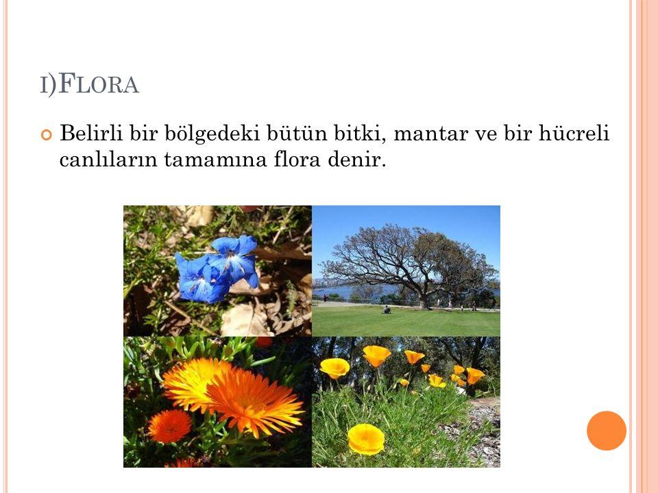 I )F LORA Belirli bir bölgedeki bütün bitki, mantar ve bir hücreli canlıların tamamına flora denir.