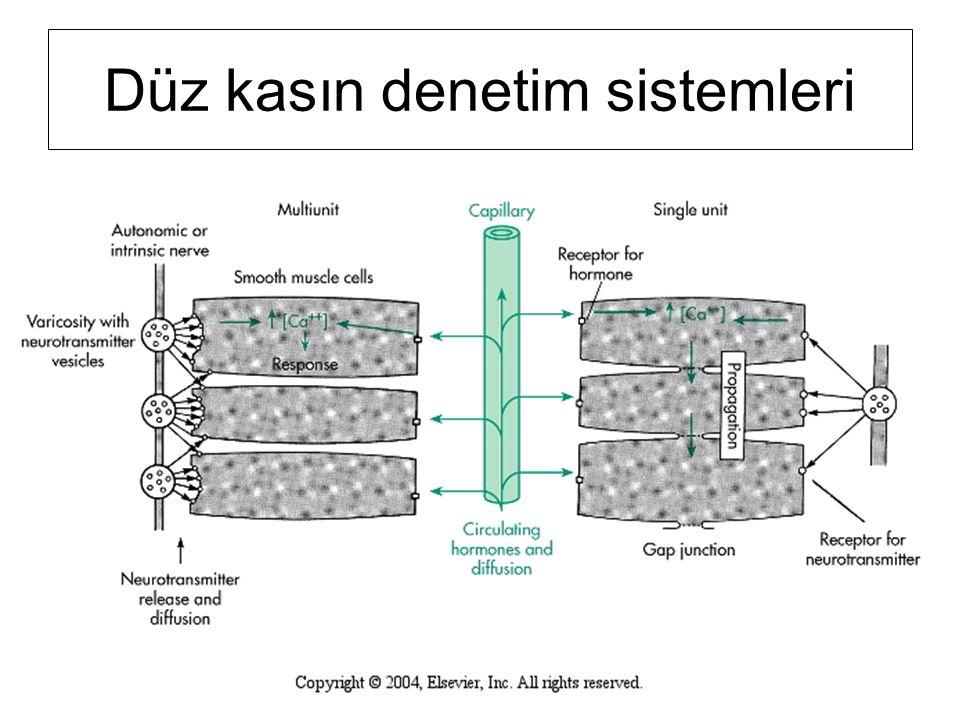 Düz kasın denetim sistemleri
