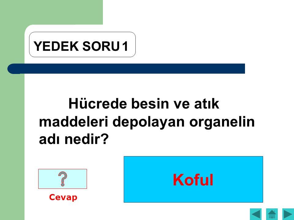 Koful YEDEK SORU1 Hücrede besin ve atık maddeleri depolayan organelin adı nedir? Cevap