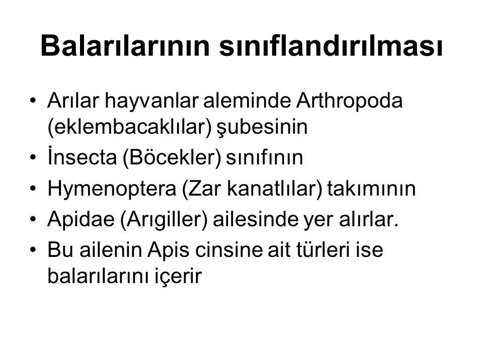 Ülkemiz balarıları Ülkemiz balarıları Apis mellifera türüne bağlı genelde Kafkas, Anadolu ırkları ve bunların alt ırk ve melezleridir.