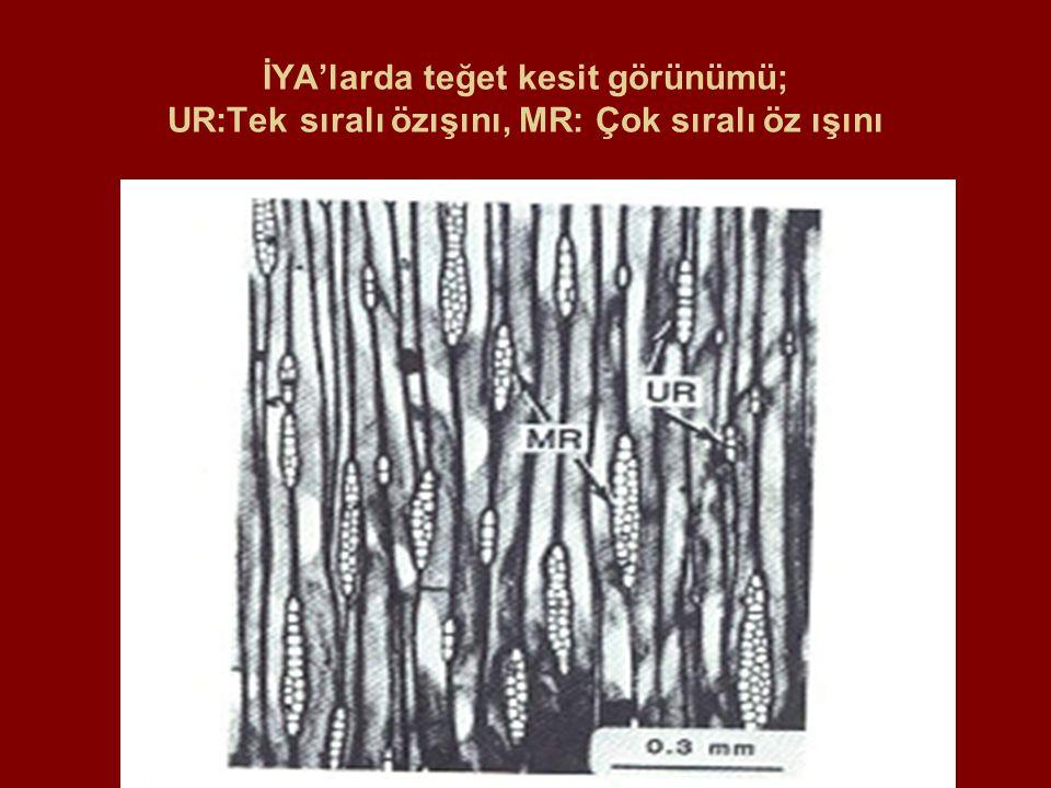 Tip II Yumuşak Çürüklük (çeper degradasyonu), a: Çamda S3, S2 degredasyonu, b,c:CCA emprenyeli huş odununda ilerlemiş tahribat, d: CCA maddesi (siyah hat) yakınında tahribat