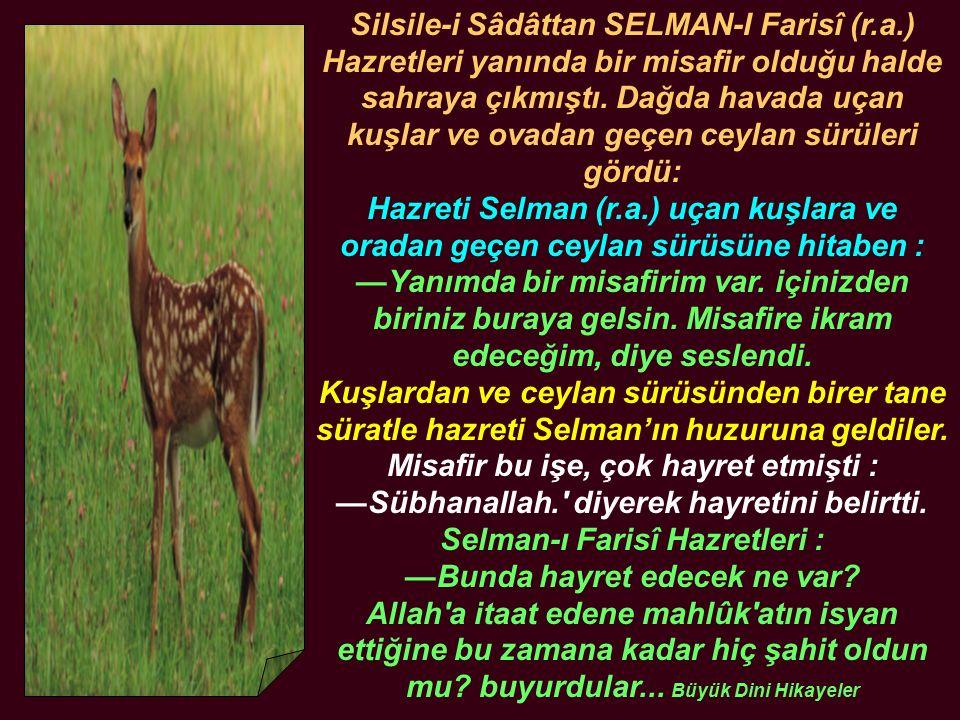 Silsile-i Sâdâttan SELMAN-I Farisî (r.a.) Hazretleri yanında bir misafir olduğu halde sahraya çıkmıştı. Dağda havada uçan kuşlar ve ovadan geçen ceyla
