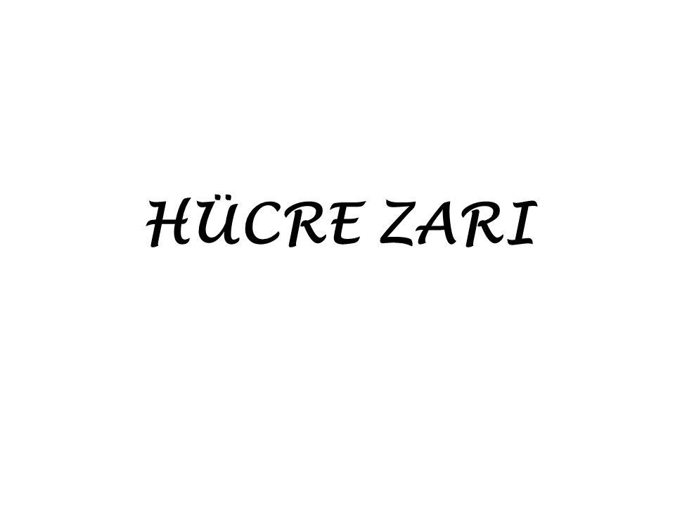 HÜCRE ZARI
