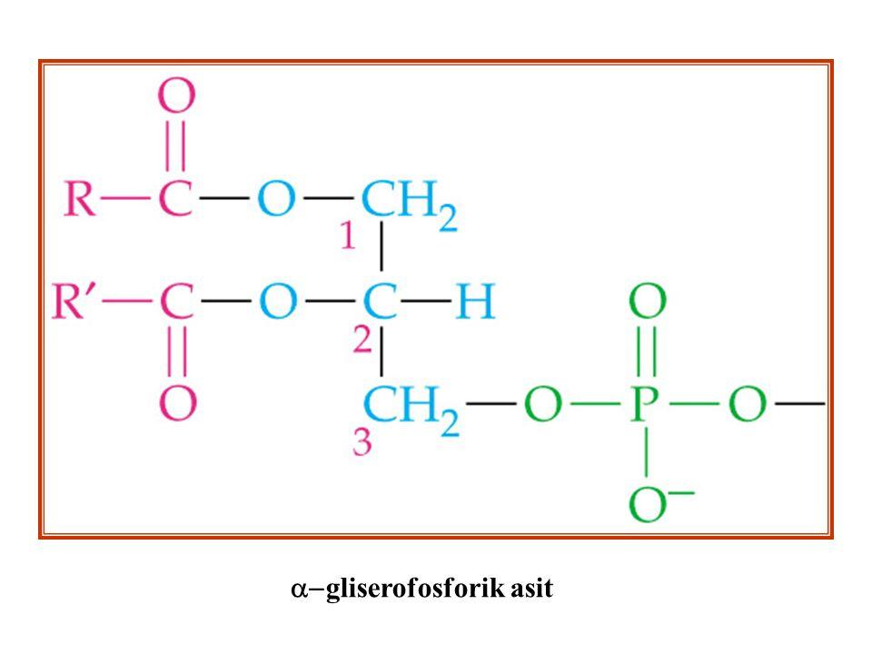  gliserofosforik asit