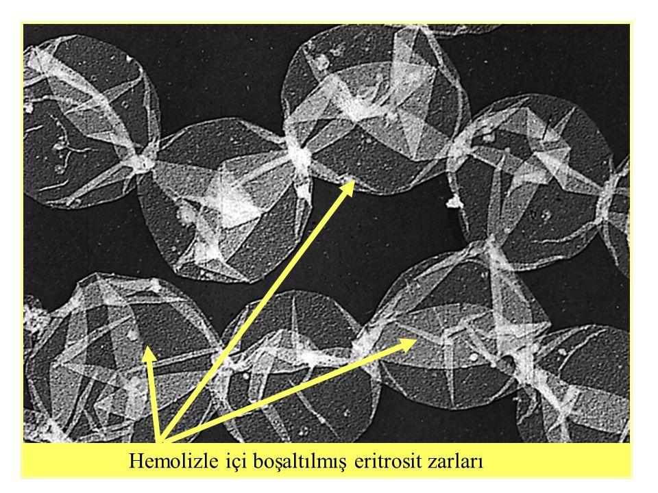 Hemolizle içi boşaltılmış eritrosit zarları