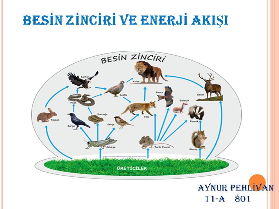 BESİN ZİNCİRİ Doğada canlılar başka bir canlıyı besin olarak kullanırken kendileride başka canlıların besini olurlar.