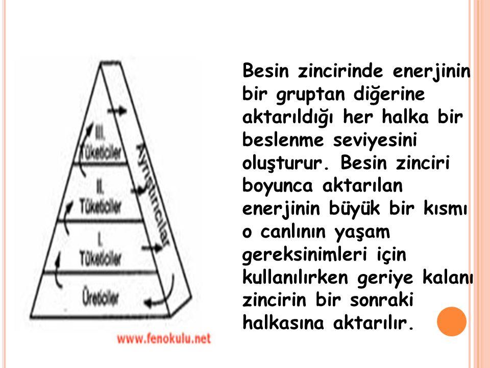 Besin zincirinde enerjinin bir gruptan diğerine aktarıldığı her halka bir beslenme seviyesini oluşturur.