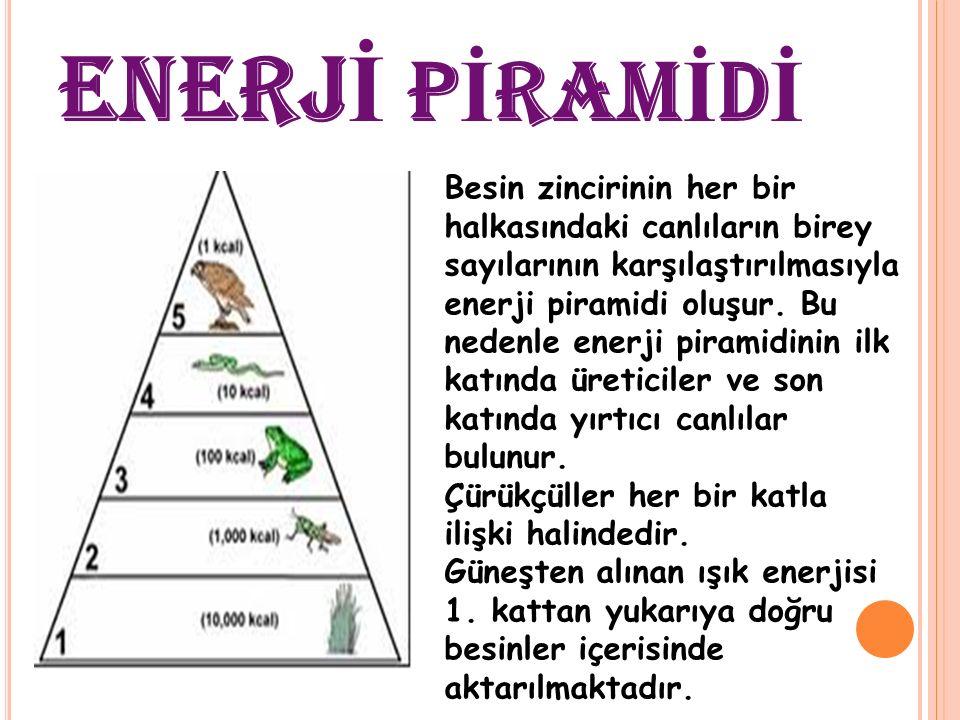 Enerji piramidinde, aşağıdan yukarıya doğru her kattaki; 1-)Canlı sayısı azalır, 2-)Tür sayısı azalır, 3-)Toplam besin ve enerji miktarı azalır, 4-)Vücutta biriken artık oranı artar, şeklinde değişmeler görülür.