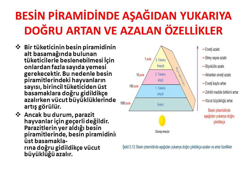 BESİN PİRAMİDİNDE AŞAĞIDAN YUKARIYA DOĞRU ARTAN VE AZALAN ÖZELLİKLER  Bir tüketicinin besin piramidinin alt basamağında bulunan tüketicilerle beslene