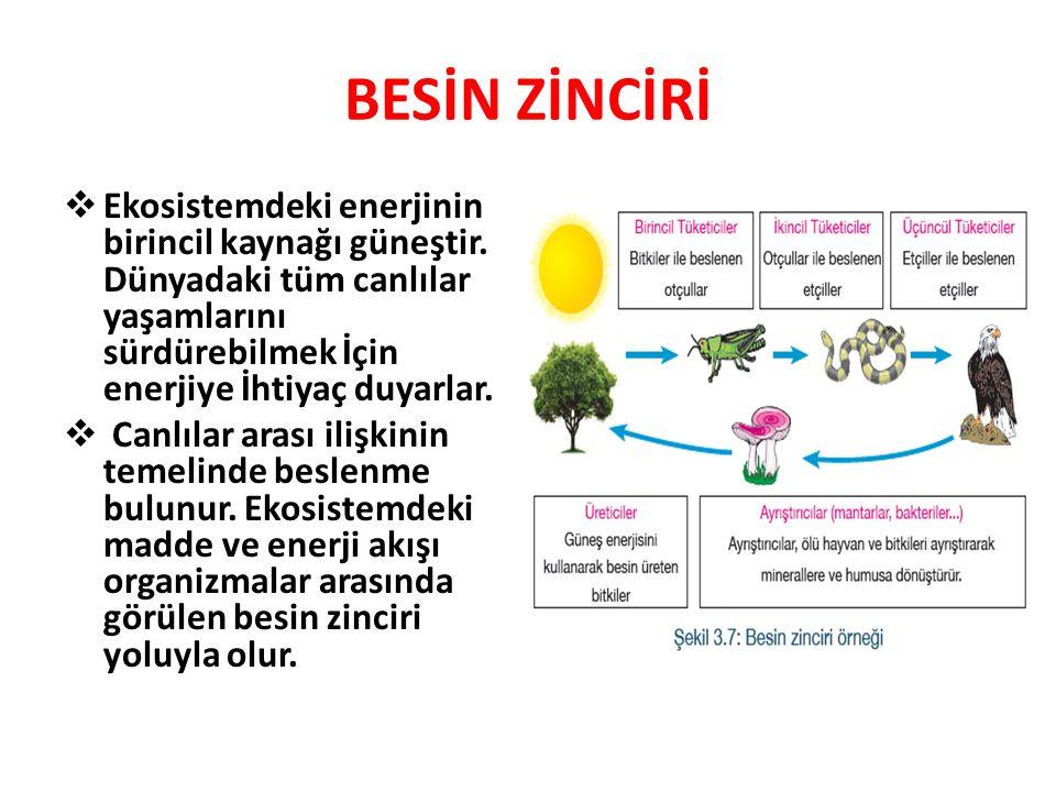 BESİN ZİNCİRİ Besin zinciri ekosistemdeki canlılardan birinin diğerini besin olarak alması sonucu oluşan bir zincirleme olaydır.