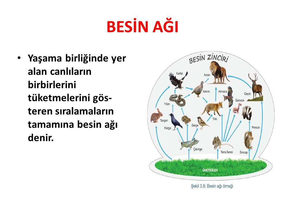 BESİN AĞI Yaşama birliğinde yer alan canlıların birbirlerini tüketmelerini gös- teren sıralamaların tamamına besin ağı denir.