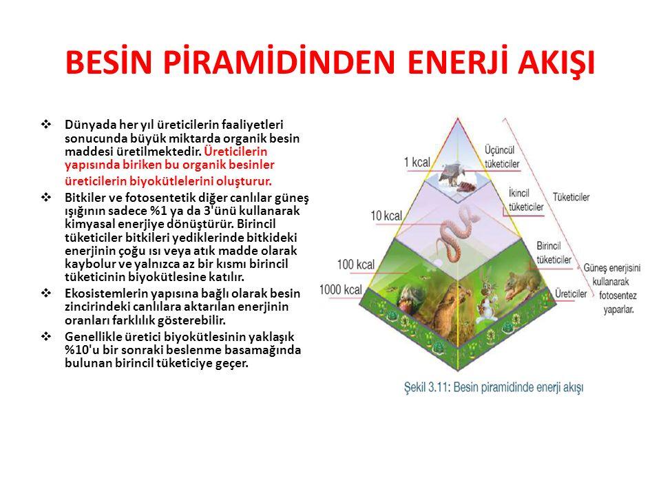  Biyokütle piramidinde, alt basamaktan yukarıya doğru çıkıldıkça toplam biyokütlede azalma olur.