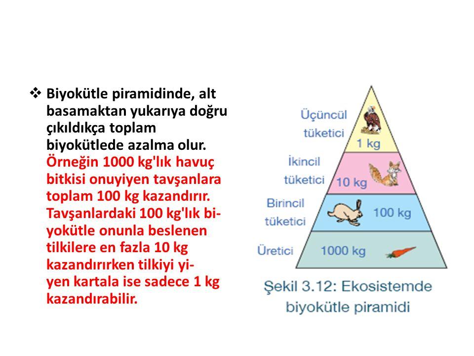  Biyokütle piramidinde, alt basamaktan yukarıya doğru çıkıldıkça toplam biyokütlede azalma olur. Örneğin 1000 kg'lık havuç bitkisi onuyiyen tavşanlar
