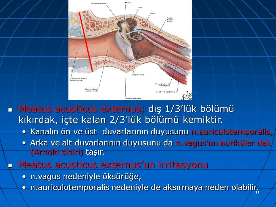 11 a Meatus acusticus externus; dış 1/3'lük bölümü kıkırdak, içte kalan 2/3'lük bölümü kemiktir. Meatus acusticus externus; dış 1/3'lük bölümü kıkırda