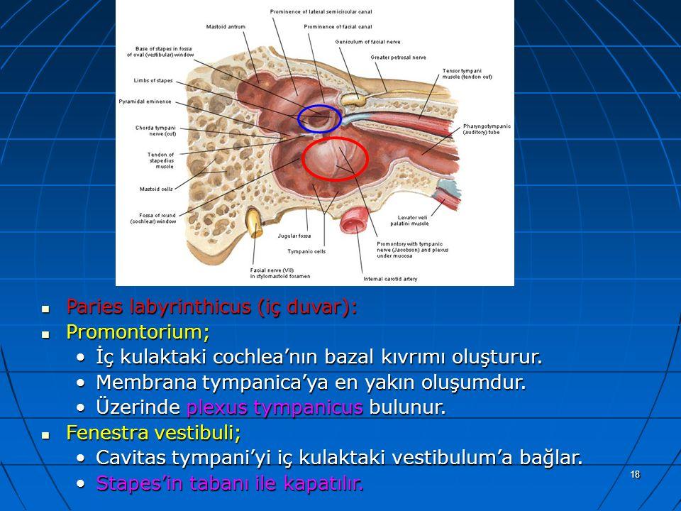 18 a Paries labyrinthicus (iç duvar): Paries labyrinthicus (iç duvar): Promontorium; Promontorium; İç kulaktaki cochlea'nın bazal kıvrımı oluşturur.İç