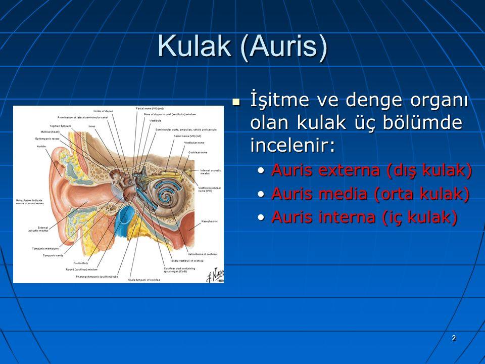 2 Kulak (Auris) İşitme ve denge organı olan kulak üç bölümde incelenir: İşitme ve denge organı olan kulak üç bölümde incelenir: Auris externa (dış kul